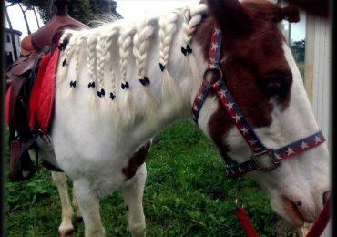 Campi estivi di equitazione