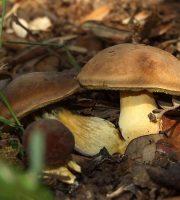 Articolo funghi